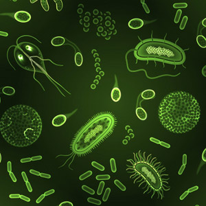 Parazita, gomba, baktérium